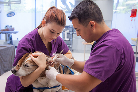 Stanbridge College Veterinary Technology Program Hosts Low-Cost Vaccine Clinic