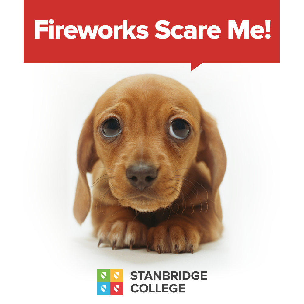 Pets and Fireworks Do Not Mix! Tips For This 4th of July