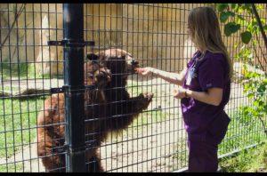 VET TECH PROGRAM FELLOWSHIP: SAVING ANIMALS FROM COVID